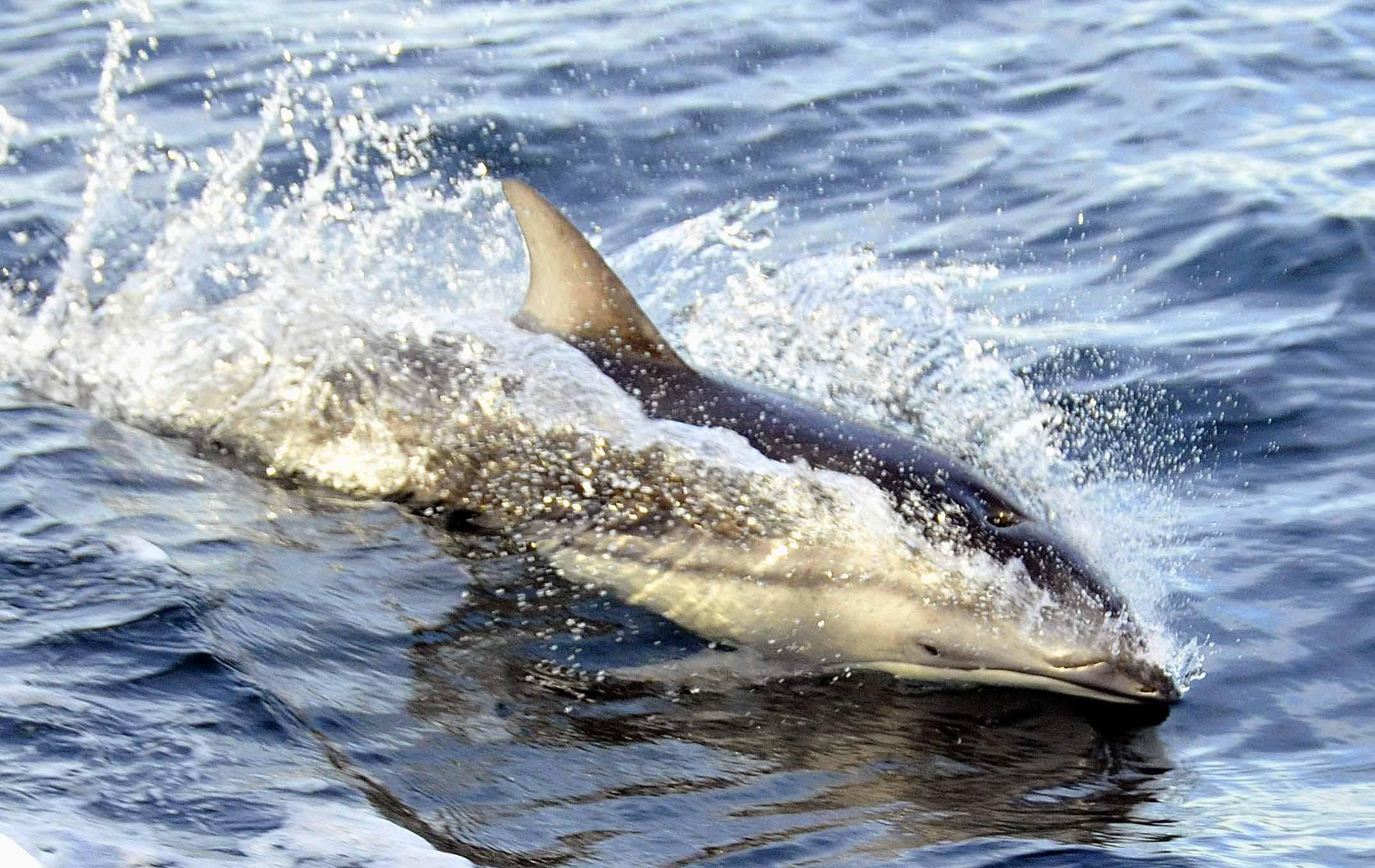 marine environment   keats island conservation group